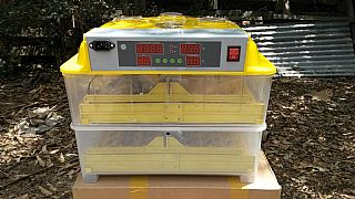 Fully-Automatic-96-Egg-Incubator