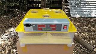 Fully-Automatic-48-Egg-Incubator